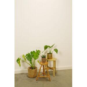 Vintage rotan plantenrek, plantentafel, plantenstandaard